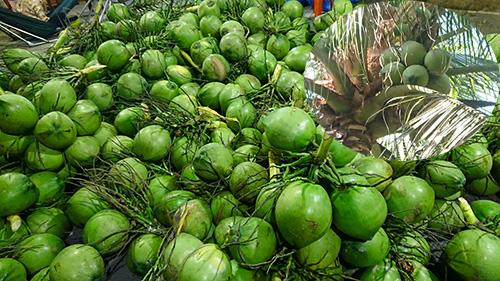 Chợ dừa xiêm giá sỉ ở Bến Tre Miền Tây miền nam
