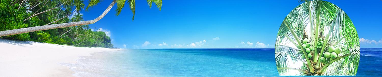 dừa và biển đẹp