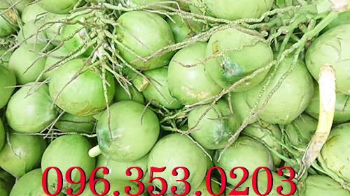 Chợ đầu mối bán dừa tươi - Ở đâu nhiều dừa tươi nhất Việt Nam?