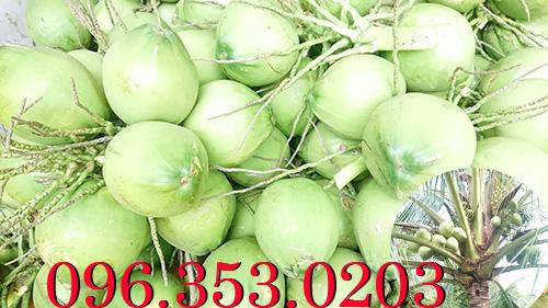 Chợ đầu mối bán dừa xiêm xanh tại Bến Tre miền tây