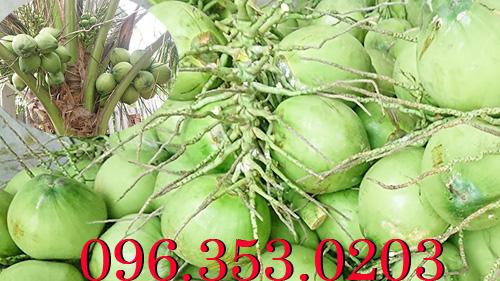 Chuyên cung cấp dừa tươi lớn nhất Bến Tre Miền Tây