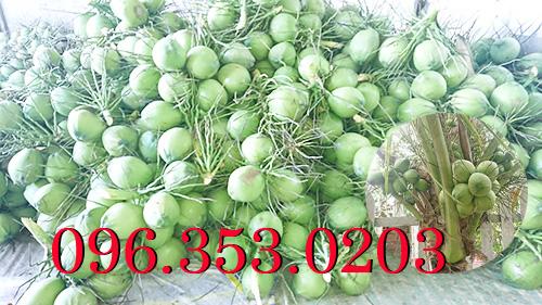 Cần mua dừa tươi số lượng lớn | Cần mua dừa xiêm xanh giá sỉ