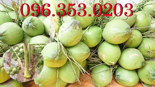 Vì sao mùa nắng giá dừa xiêm xanh tăng cao