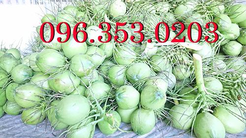 Ở đâu nhiều dừa xiêm xanh nhất Việt Nam